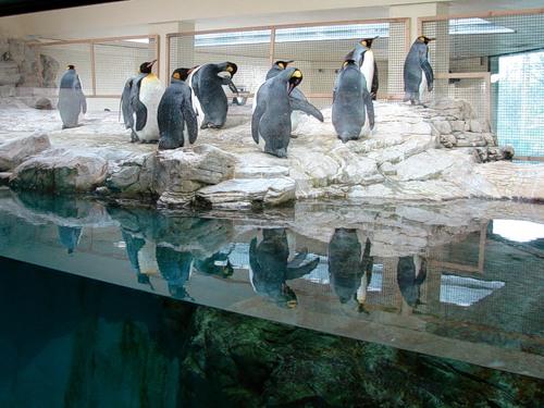 Системы туманообразования для зоопарков
